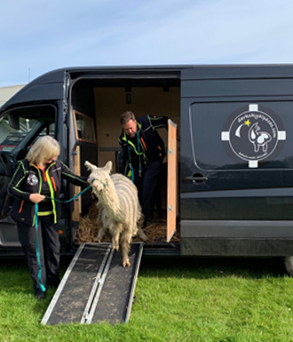 alpaca van conversion