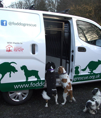 animal transport van conversion for dogs