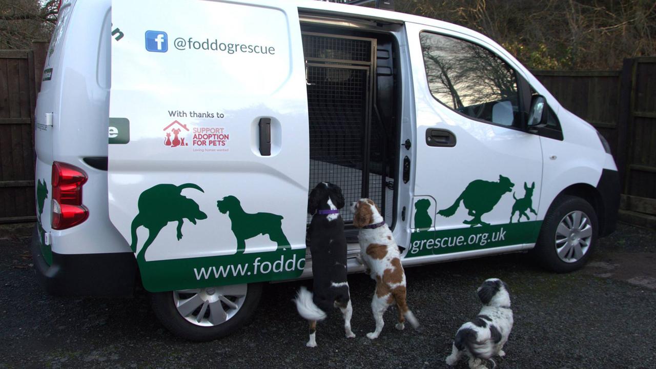 animal transport van